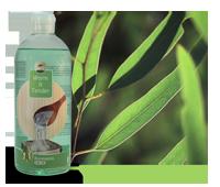 Euqalyptus-geur